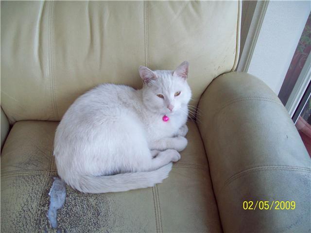 Gandalf the White Cat.
